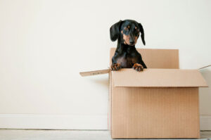 Finding an Affordable Mover in St. Louis